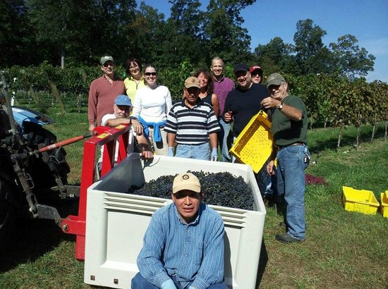 Cave Ridge Vineyard: Harvest Party