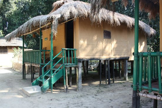 Nature Hunt Eco Camp, Kaziranga:                   Cottage