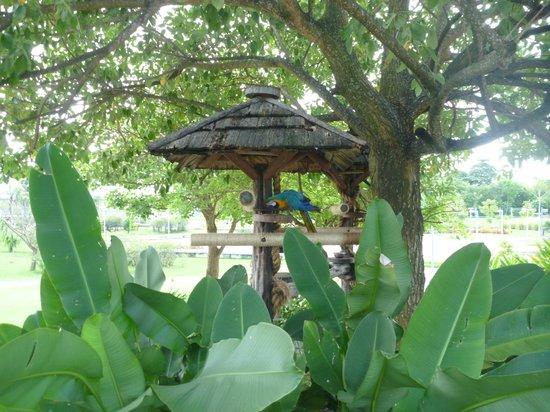 Manjar das Garcas:                   Vista do Parque