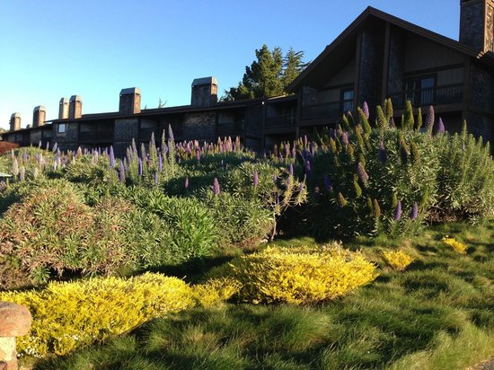 Bodega Bay Lodge:                   The grounds are beautiful!