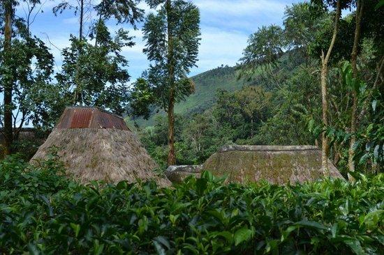Bwindi Lodge 사진