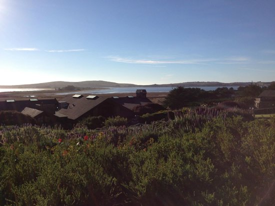 Bodega Bay Lodge:                   the harbor