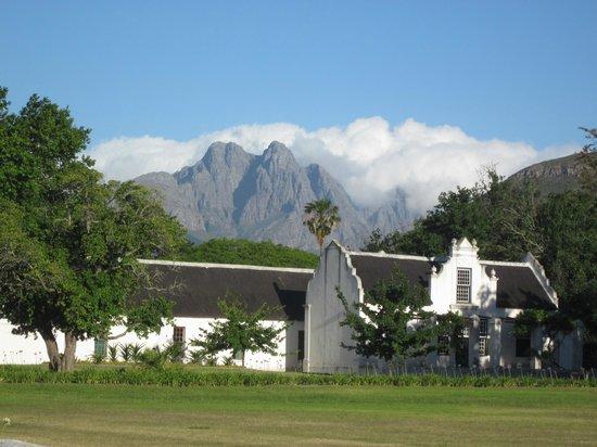 Keren's Vine: Stellenbosch