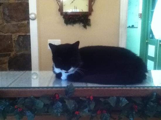 Joseph Ambler Inn:                   shadow the inn cat!!