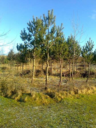 Herrington Country Park:                   Trees !