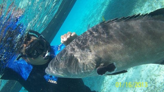 "The Phoenix Resort:                                     Hotel Arranged Snorkel Tour ""Big Sexy"" & Grouper"