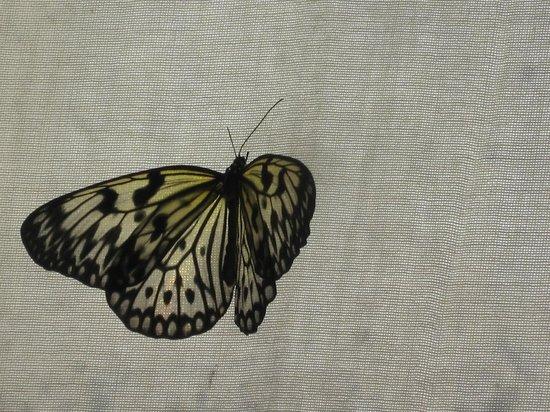Butterfly House Elbauenpark:                   Schmetterlingshaus