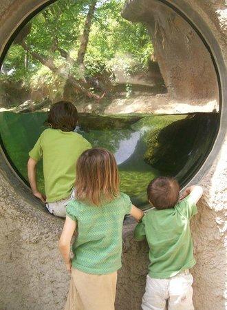Ньюпорт-Ньюс, Вирджиния:                   Otter Exhibit on Zoo Walkway