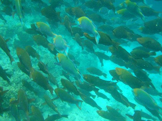 Vakarufalhi Island Resort:                   che mondo lì sotto!!