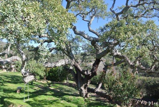 Molino Rio Alajar:                   prachtige bomen