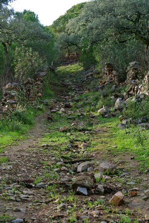 Molino Rio Alajar:                   wandelen
