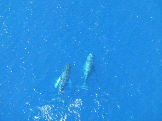 Wings Over Kauai Air Tour:                                     Whales!