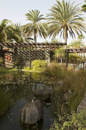 IFA Catarina Hotel:                   The small pond and outdoor lounging areas
