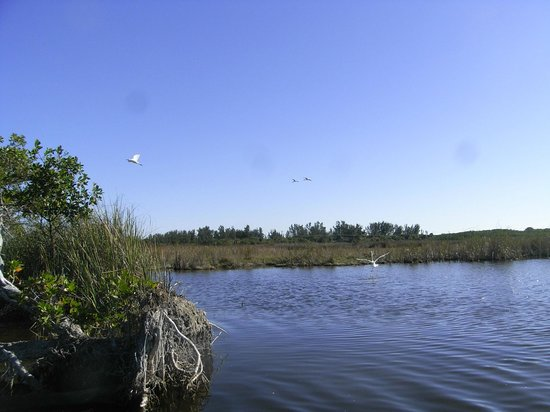 Capt Mitch's - Everglades Private Airboat Tours:                   Airboat in the Everglades with Conrad: Faboulous!