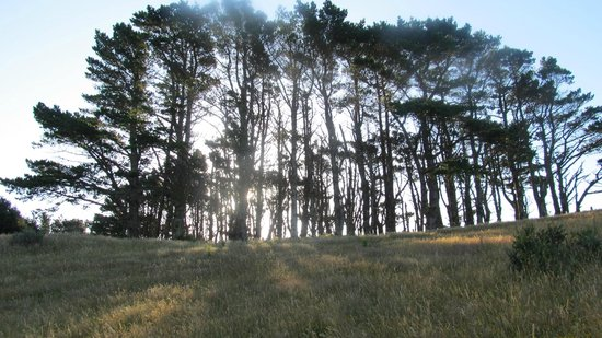 Mount Kaukau:                   Pine trees near the transmitter tower ... a different occasion, earlier in the