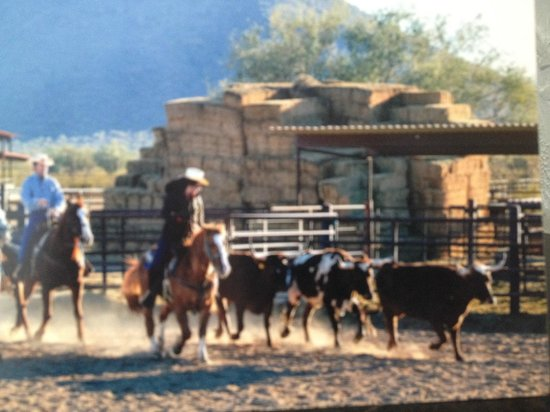 White Stallion Ranch:                   Cowboys for a day!
