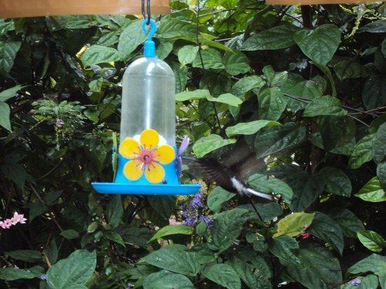 Pousada Colibri:                   Bucólico