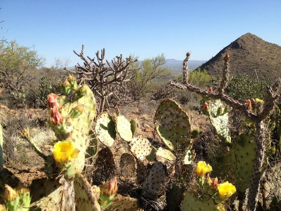 JW Marriott Scottsdale Camelback Inn Resort & Spa:                   If you're lucky, the desert will be in bloom!