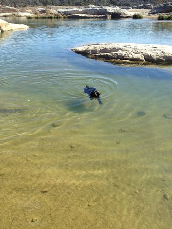 Pedernales Falls State Park:                   Clear and Cool