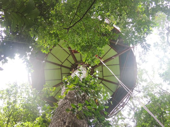 Naturobservatoriet:                                     TREE HOUSE