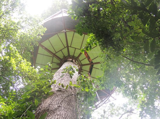 Nature Observatorio:                                     TREE HOUSE