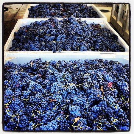 Proulx Wines: Harvest 2012