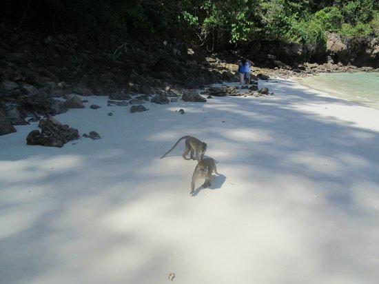 Simba Sea Trips:                   ..
