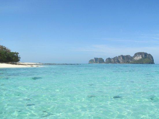 Simba Sea Trips:                   -