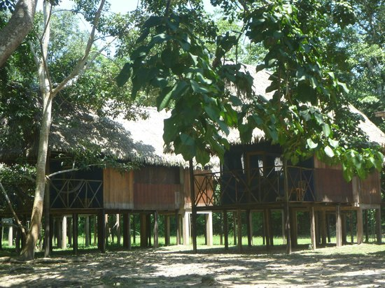 Muyuna Amazon Lodge:                   The cabins at the lodge