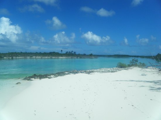 Pigeon Cay Beach Club:                   Alligator Creek