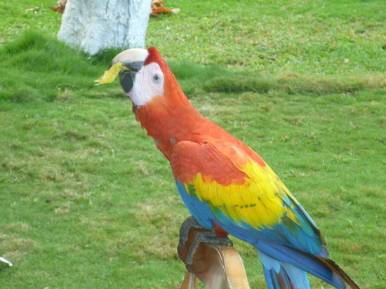 Beach Break Resort:                   Macaw