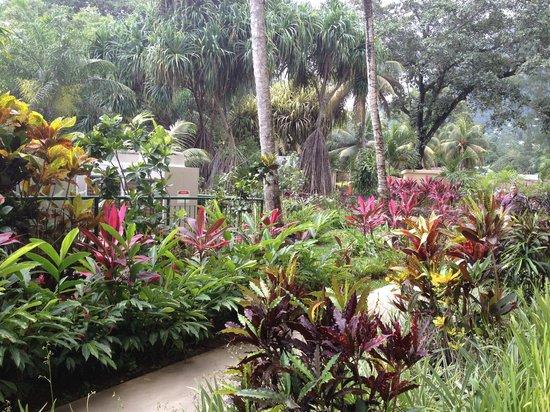 Coral Strand Smart Choice Hotel Seychelles:                   Garten mit Takamaka-Bäume und Mangroven