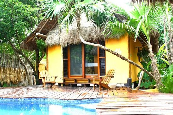 La Zebra:                   Jungle bungalow