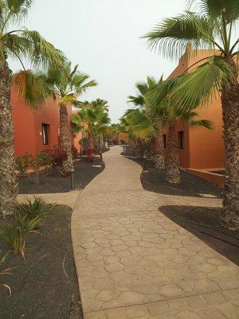 Villas Oasis Papagayo:                   Petite allée pour aller à notre chambre