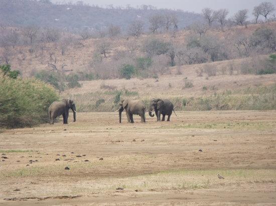 Elephants at Mpila Camp
