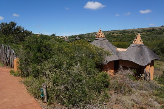 Amakhala Safari Lodge:                   Neatly tucked away in the bush