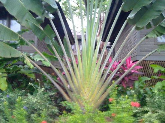 Media Luna Resort & Spa:                   le piante del giardino