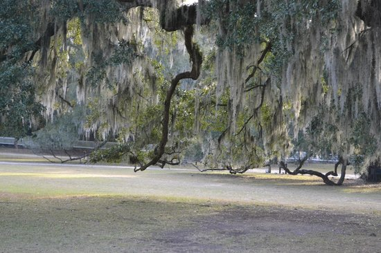 Inn at Middleton Place:                   Grounds near original home (available to tour.)