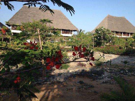 Jacaranda Beach Resort:                                     giardino