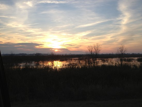 Savannah National Wildlife Refuge:                   Sunset