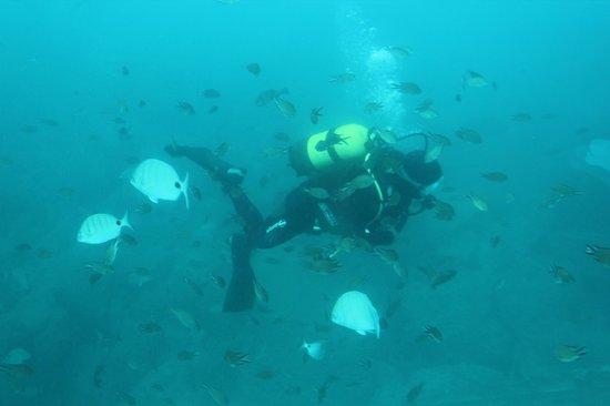 Subcat:                   le plongeur qui nourrit les poissons
