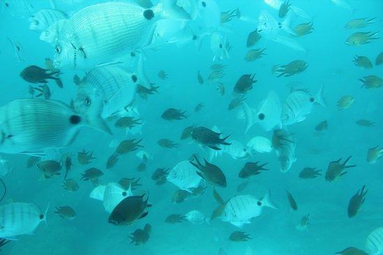 Subcat:                   les poissons