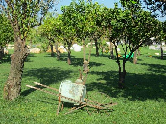 Hotel Borgo Pantano:                   Garden