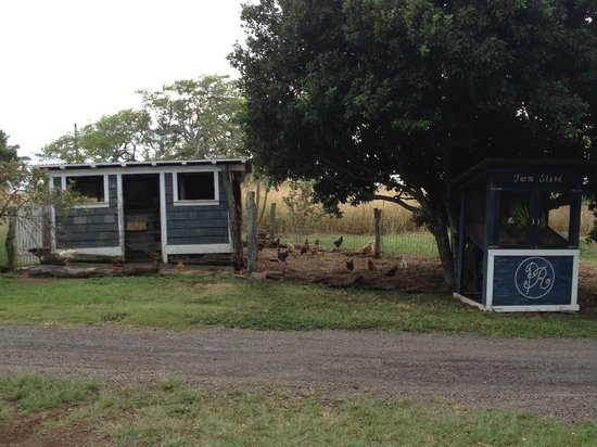 Puakea Ranch:                   Chicken coop and banana stand