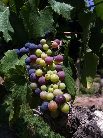 Mendoza Wine Experience Day Tours
