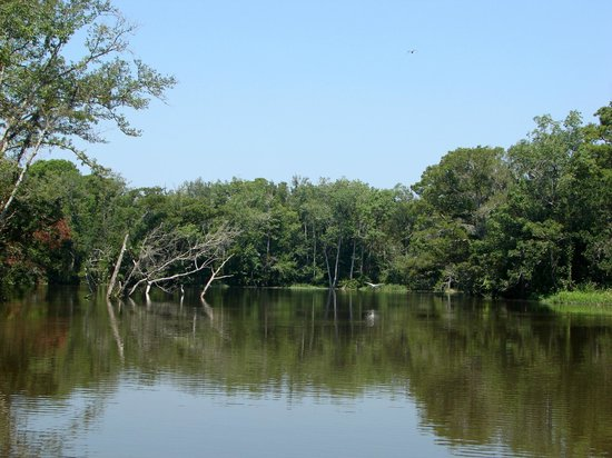 Pearl River Eco Tours:                   Bird Flyway
