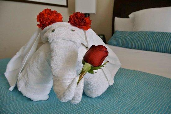 Iberostar Cancun:                   Elephant