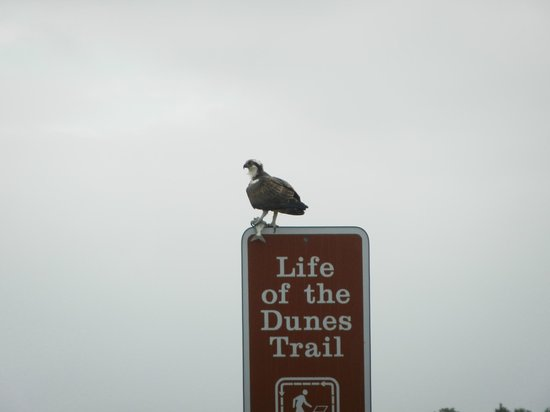 Assateague Island National Seashore:                   Nice catch! Life of the Dunes Trailhead