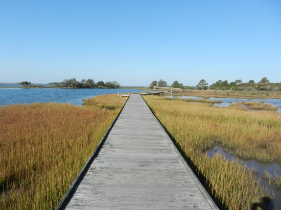 Assateague Island National Seashore:                   Life of the Marsh Trail October 2012 (before Sandy)