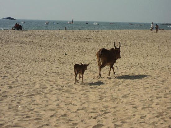 Baga Beach :                                     strolling on the beach with the family